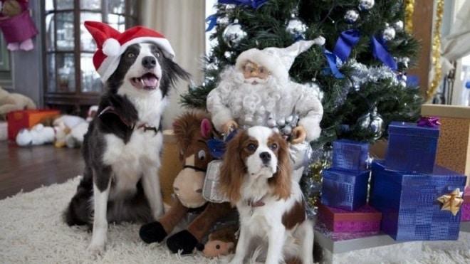 Собаки под елкой