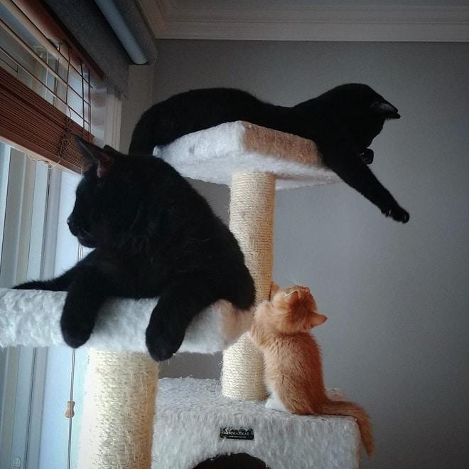 Котенок и коты