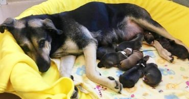 Mama and puppies