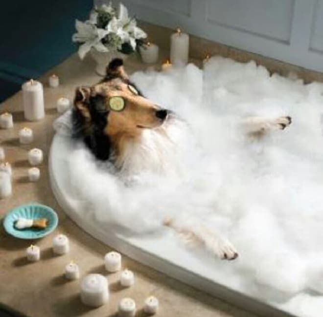 Собака в пене