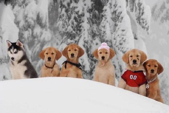Шесть щенков в снегу