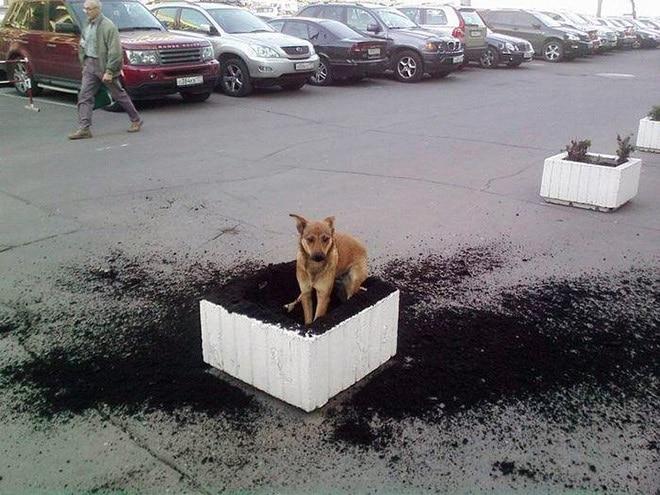 Собака на клумбе