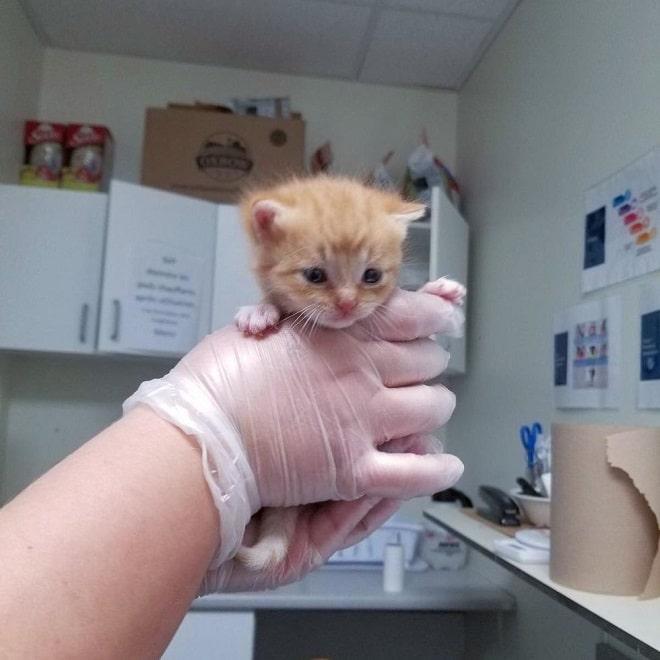 Котенок в больнице