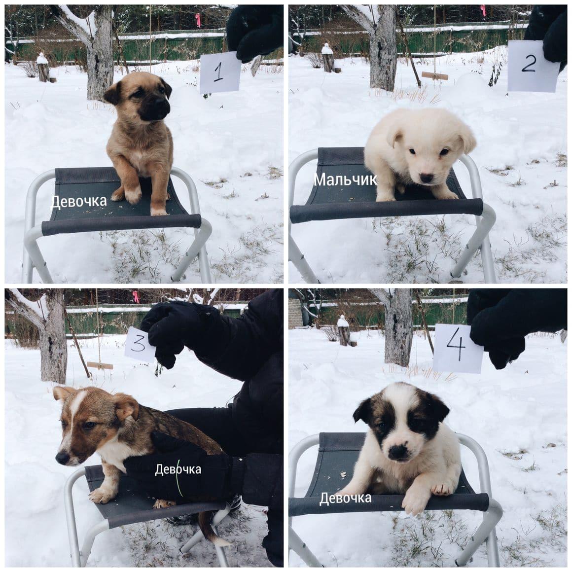 фото щенков