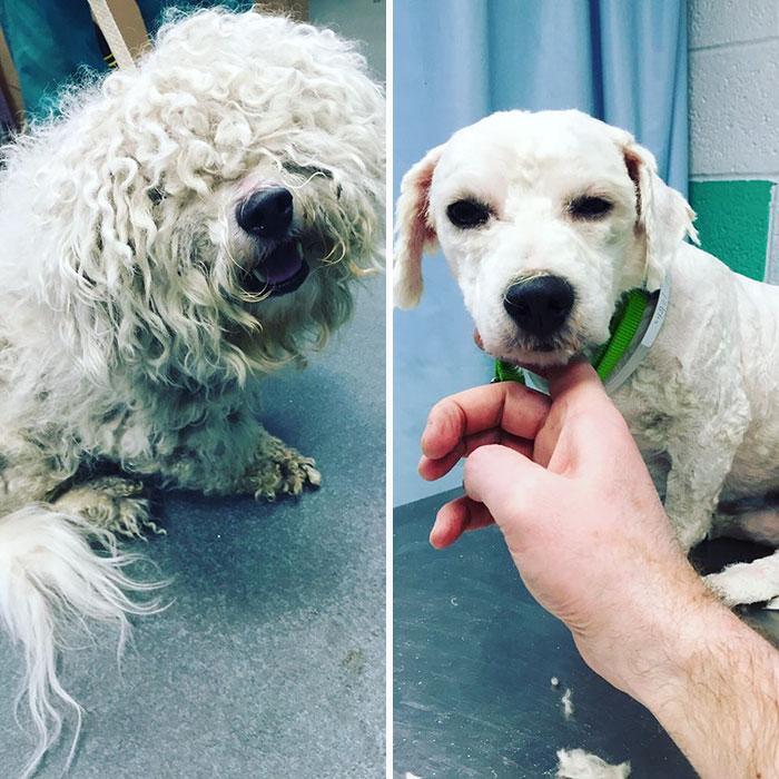 собака до и после стрижки рис 8