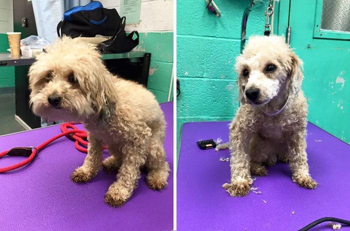 собака до и после стрижки рис 5
