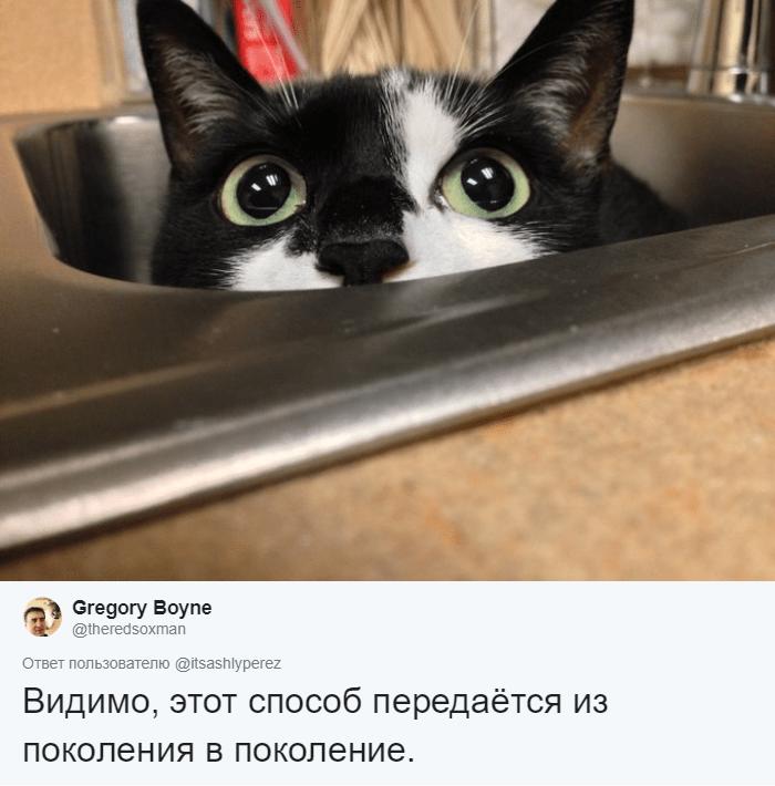 кот в раковине рис 2