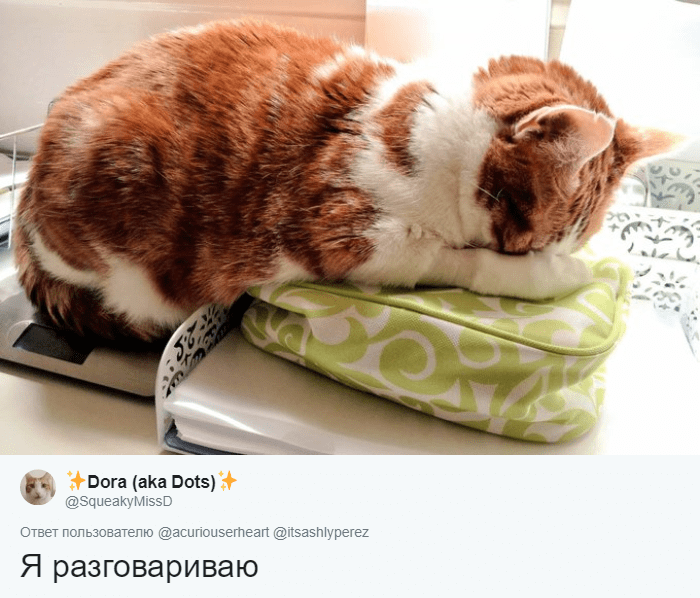 кот притворяется спящим рис 2