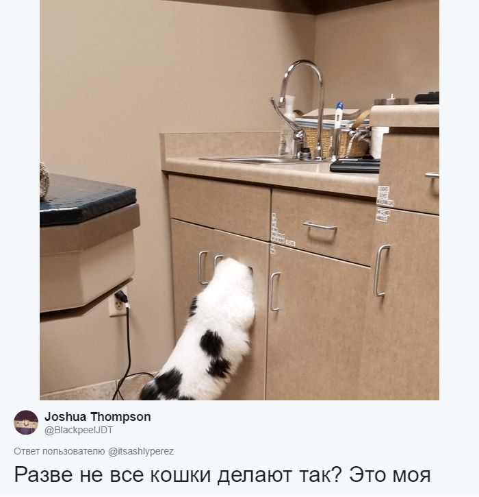 кот прячется рис 2