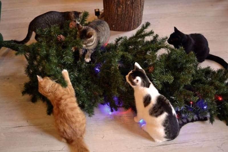коты повалили елку