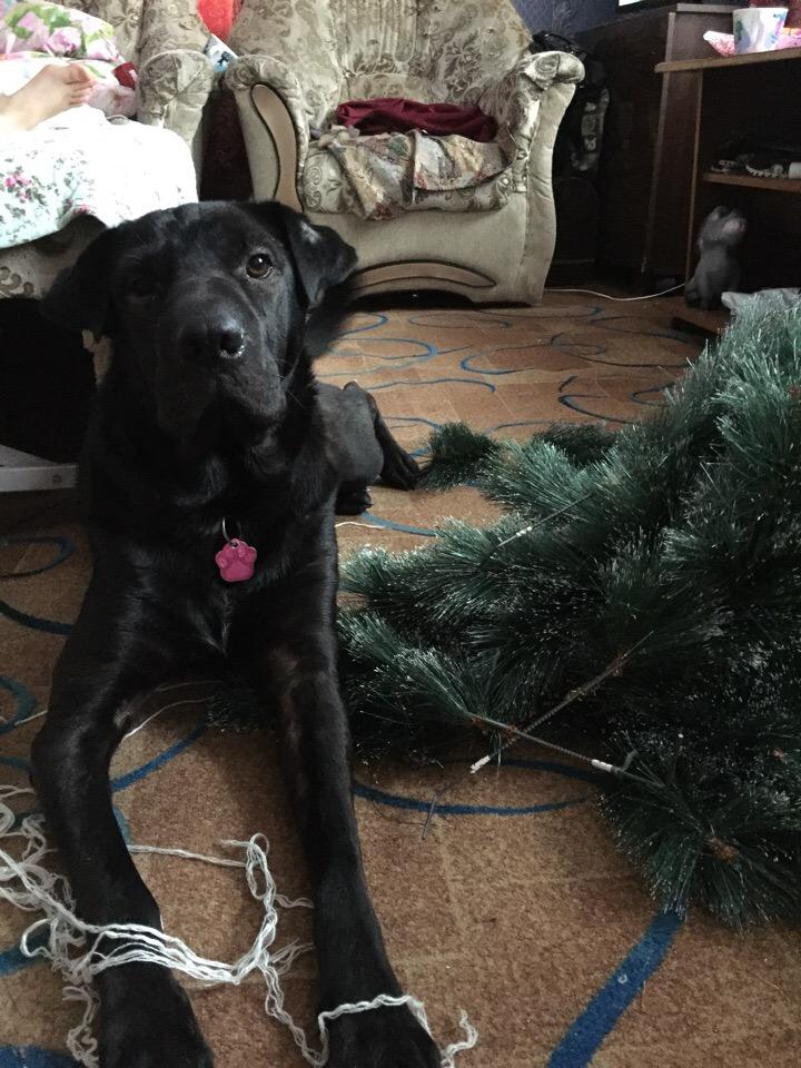 собака и елка