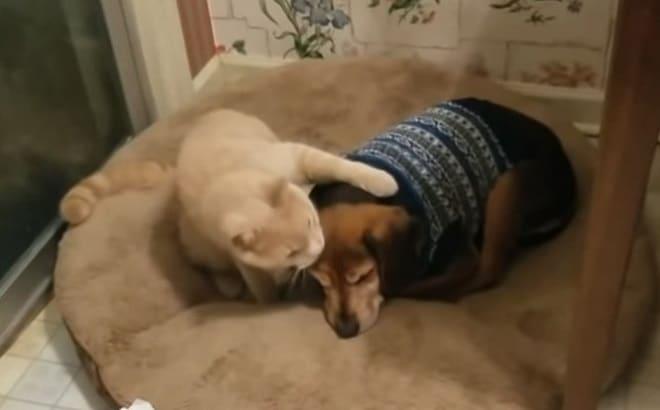 Котик обнял собачку
