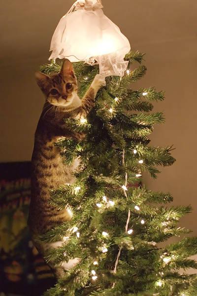 кот на елке рис 3