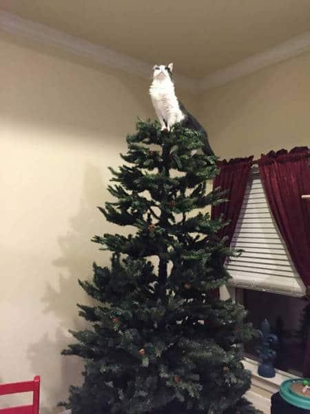 кот на елке рис 4