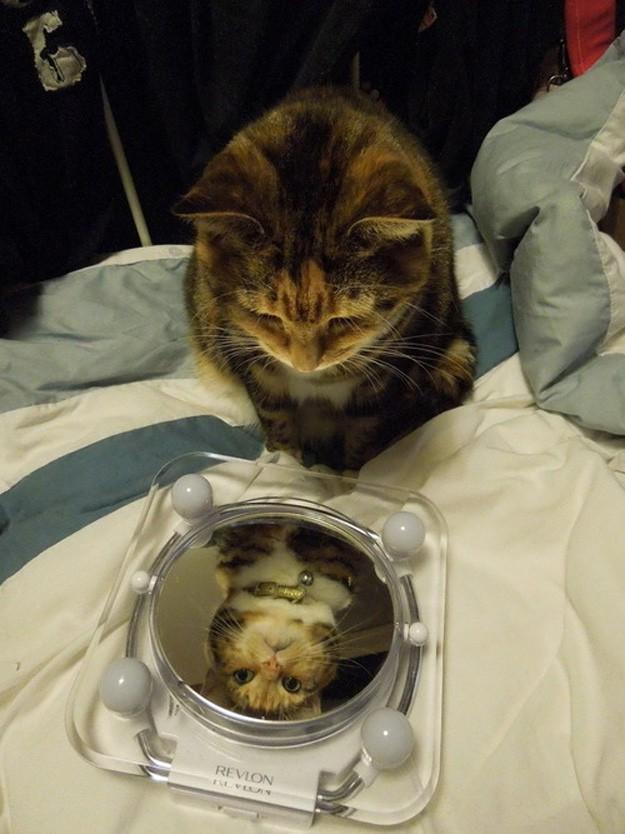 кот смотрит на себя в зеркало