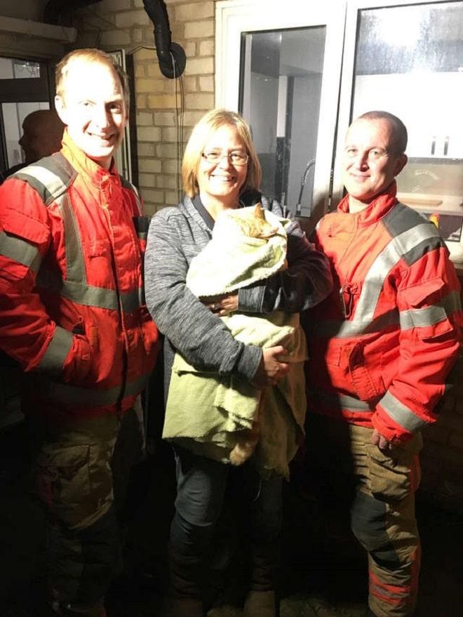 Кот и спасатели
