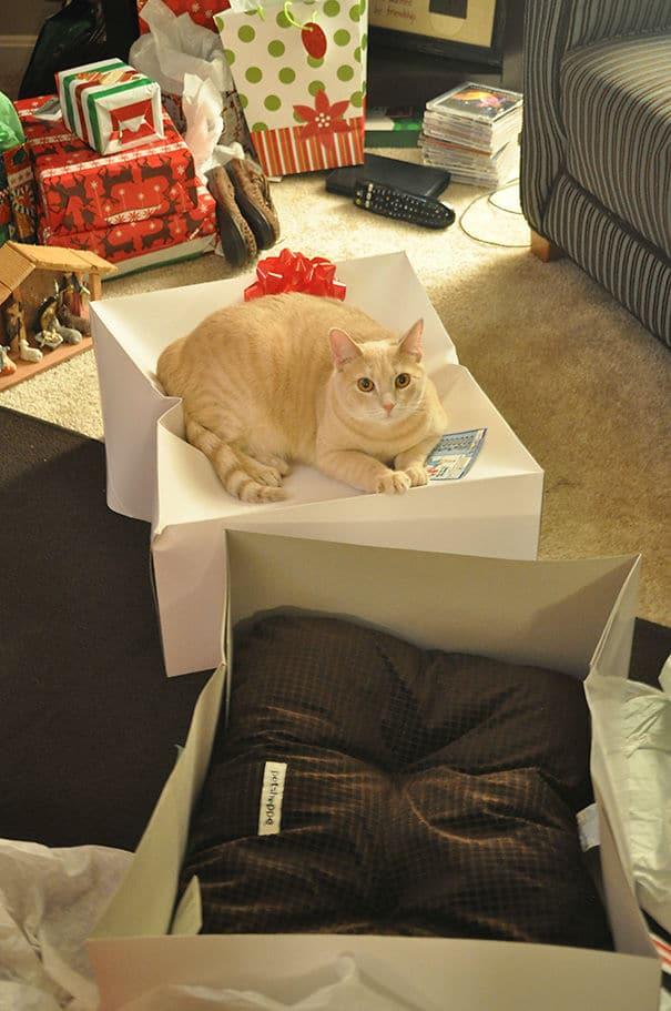 подарок коту