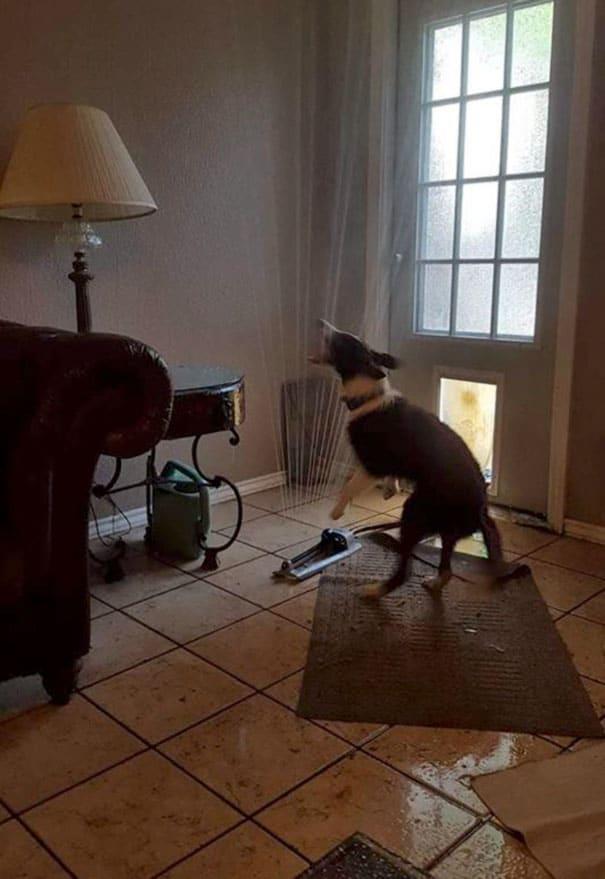 собака нашкодила
