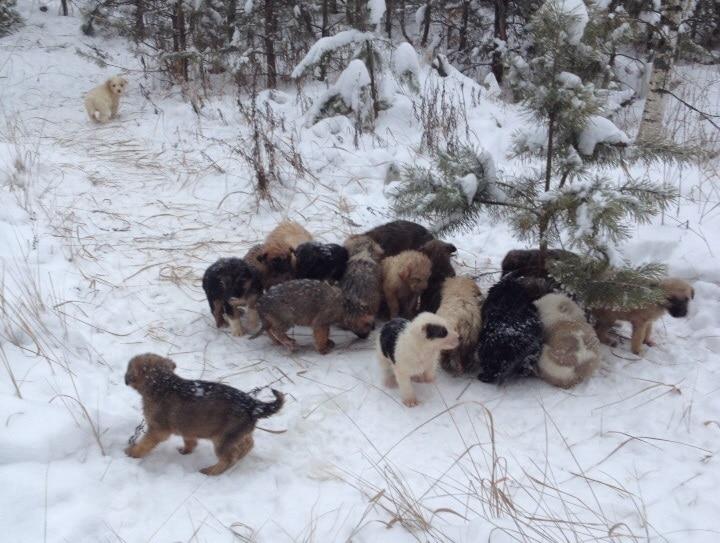 щенков бросили в лесу