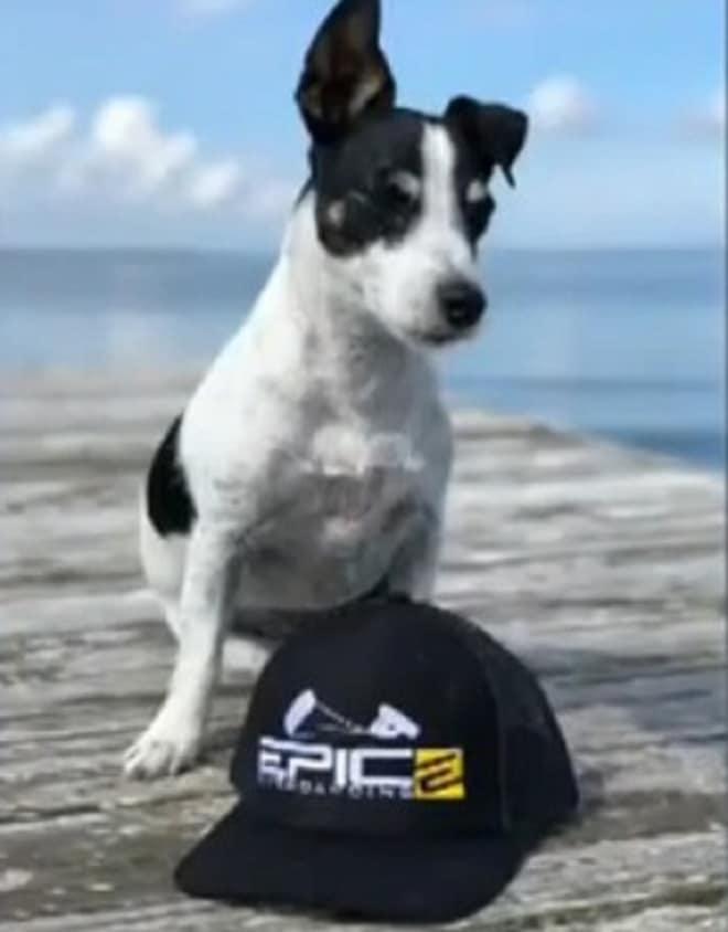 Собака и кепка