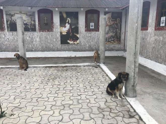 Собачки сидят