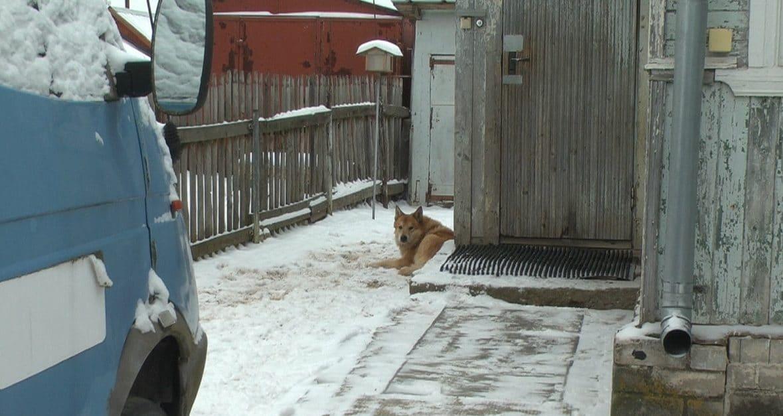 пес во дворе