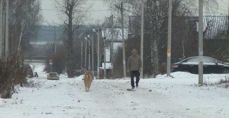 пес гуляет с мужчиной