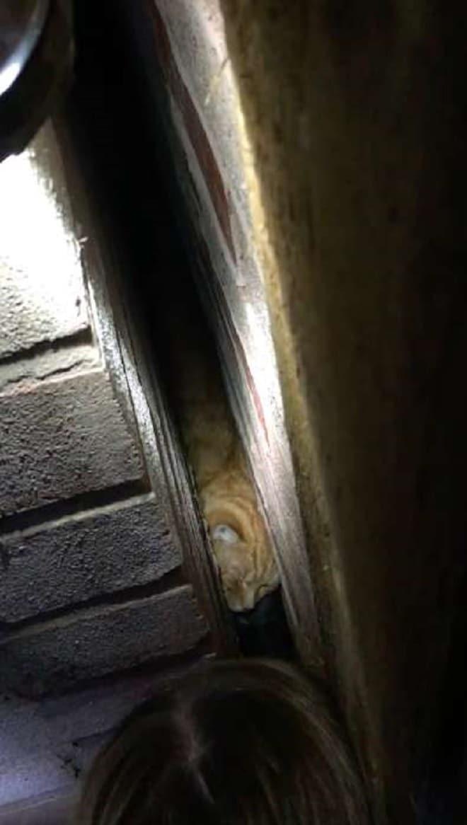 Кот в щели