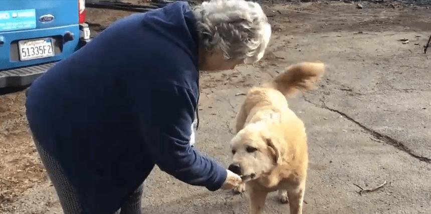 женщина кормит пса