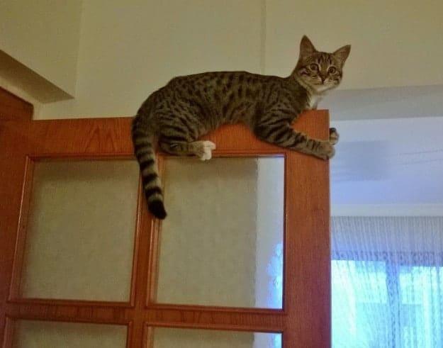 кот на двери