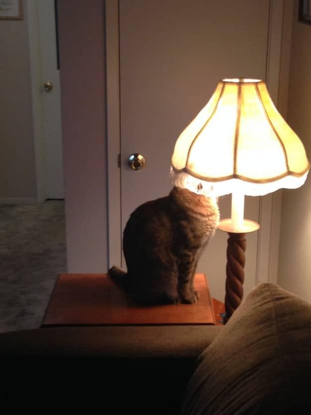 кот рядом лампой