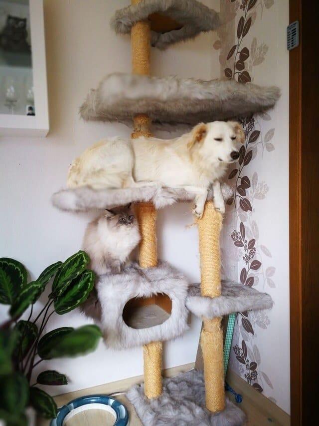 собака сидит с котами