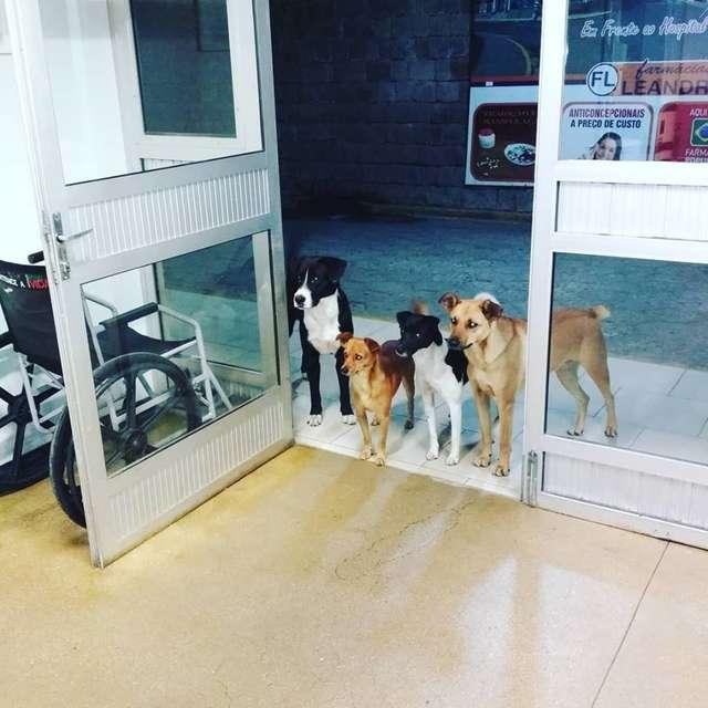 собаки у дверей