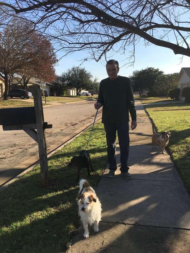 мужчина гуляет с собаками