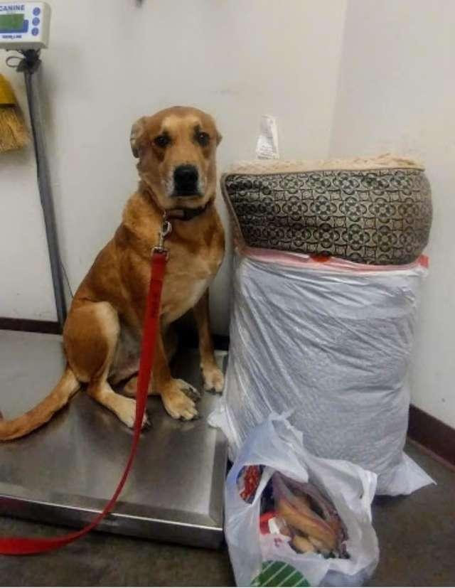 собака рядом с пакетом