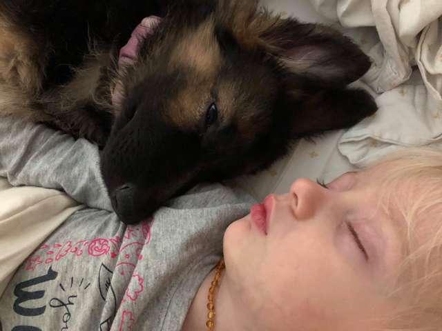 пес и ребенок