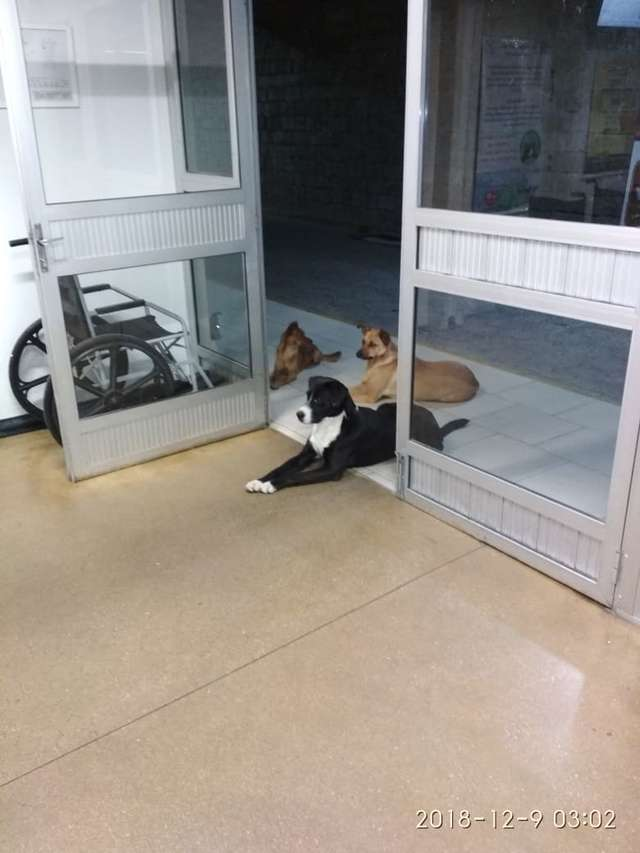 собаки ждут у дверей