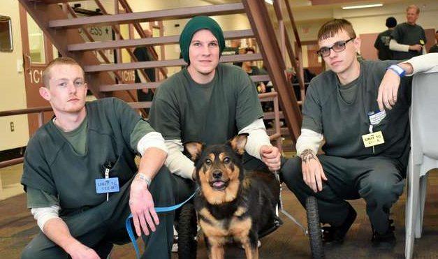 собака рядом с заключенными