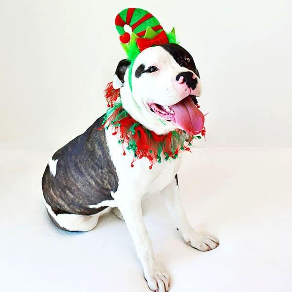 собака в шапке
