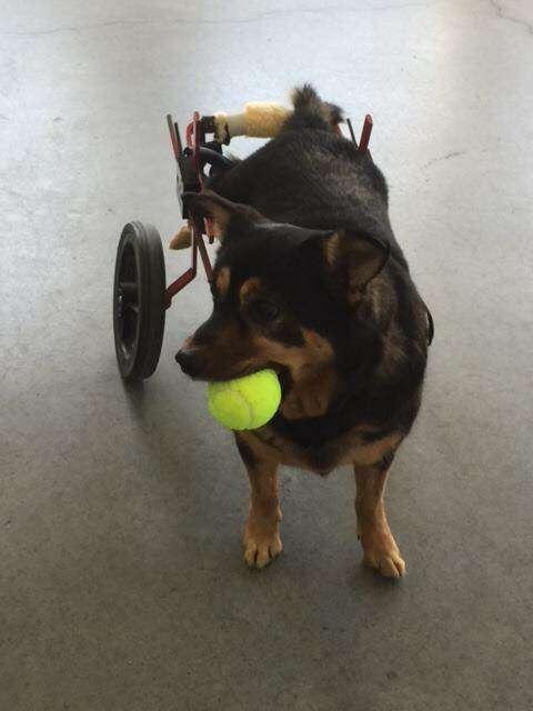 пес с мячиком во рту