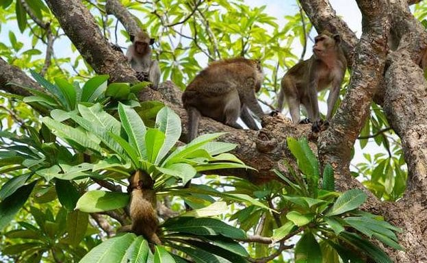 макака на дереве
