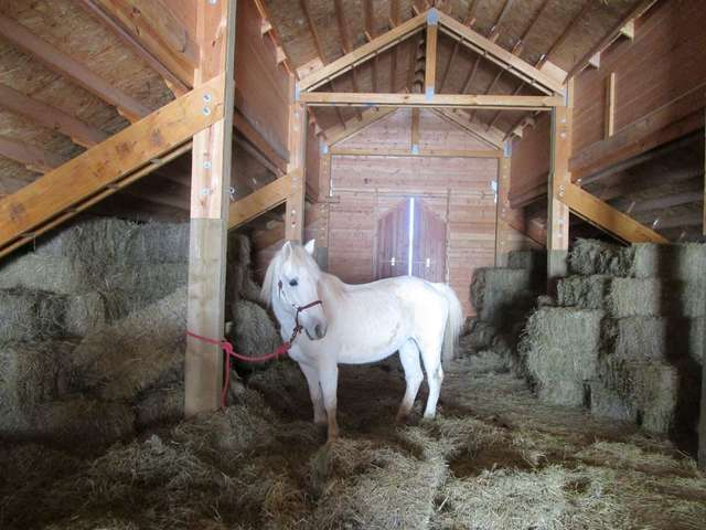 лошадь на сеновале