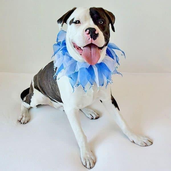 собака в костюме рис 4