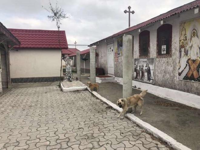 Привязанные собачки