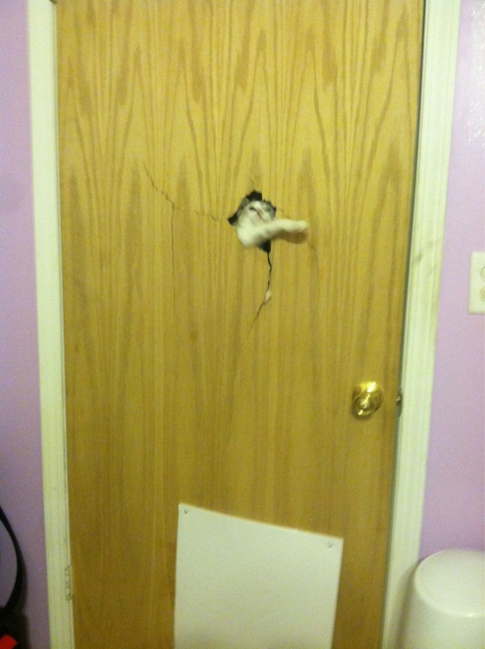 кот рушит дверь