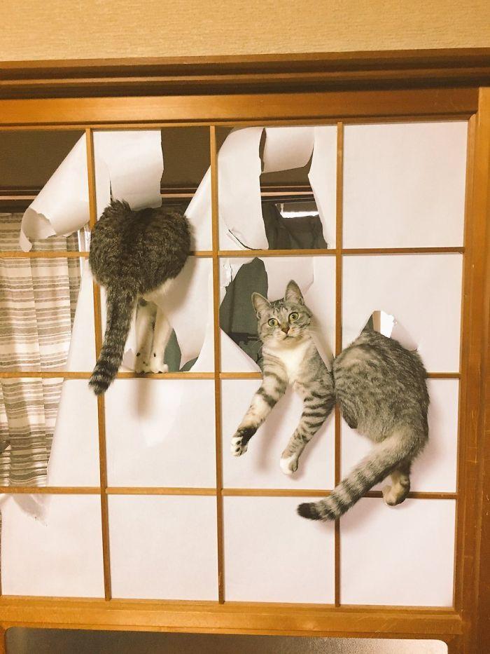 коты проказничают