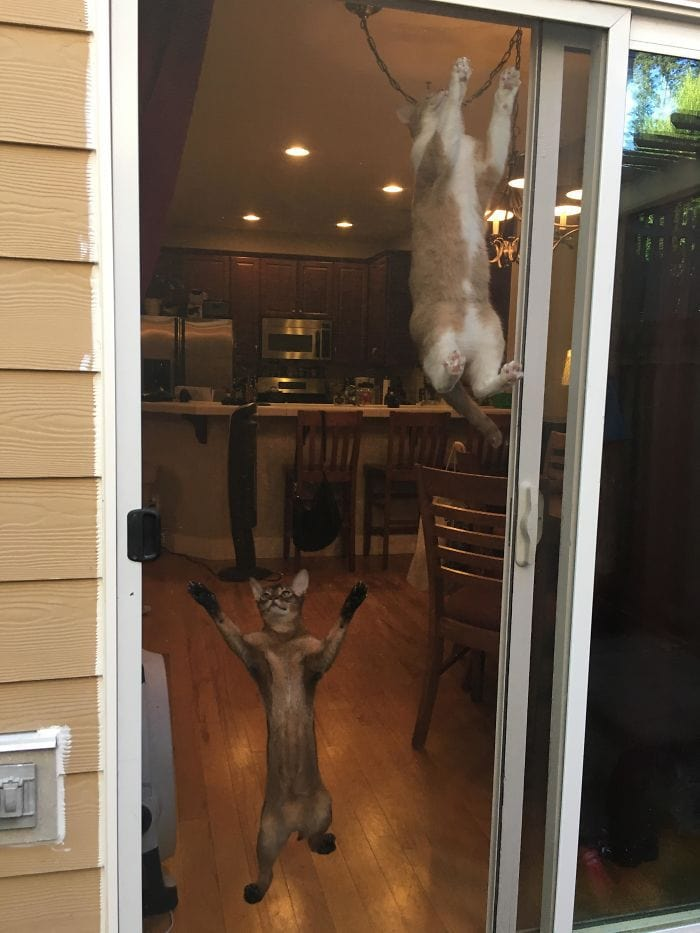 коты прыгают на двери