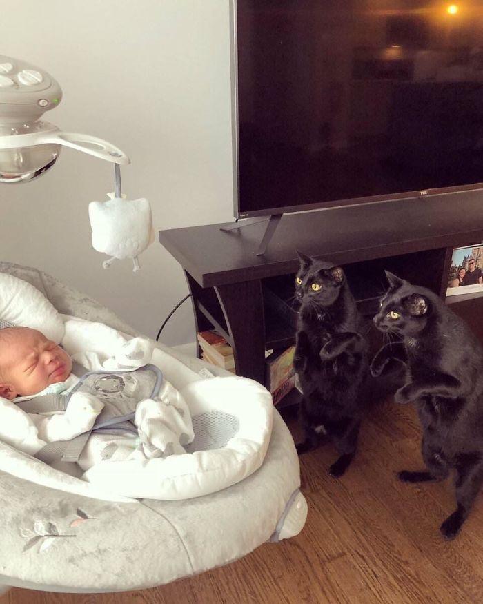 два кота и ребенок