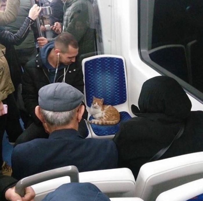 кот в транспорте