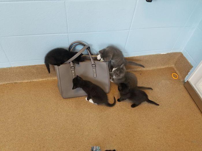 котята лезут в сумку